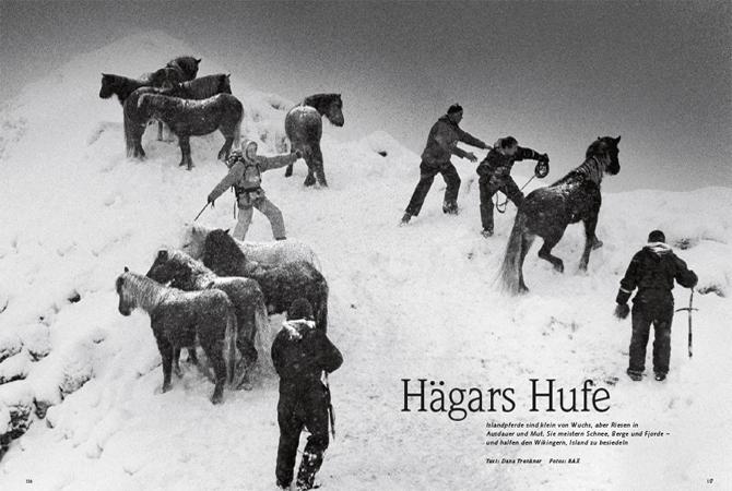 Islandpferde im Schneetreiben
